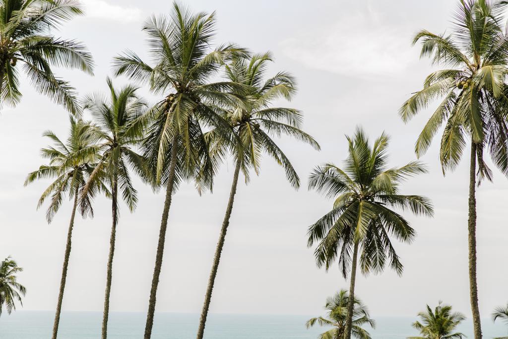 Sri Lanka, un pays merveilleux !